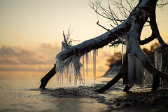 winter can't wait (Marc McDermott) Tags: tree winter ice cold lake ontario fall autumn sunset shore beach petticoatcreek water clouds