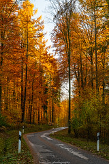 Golden Autumn Road - November 2019 I (boettcher.photography) Tags: rheinneckarkreis badenwürttemberg germany deutschland sashahasha boettcherphotos boettcherphotography herbst autumn fall november 2019 baum tree bäume trees strase road mückenloch neckargemünd finsterbachtal