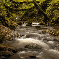 Water Flow (ivanstevensphotography) Tags: gorge river water stream cascade trees forest woods leaves branches moss rocks rain light colour