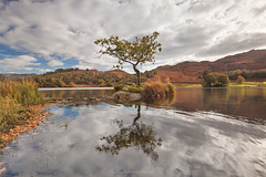 Lone Tree - R Y D A L  L A K E (Twogiantscoops) Tags: 1635mmf4 cpfilter thelakes countryside rydal lonetree britishheartfoundation iplymouth lee photoshop creative marshland northlakes countryfile filters cableremote canon painterly rydalwater autumness landscape leefoundationkit treescape wideangle 5dmk2 leefilters rydallake cumbria thenorth marshes intervalometer softgrad manfrotto lonelytree keswick lakedistrict treereflections circularpolariser lakes chrismarshall'simages twogiantscoops ndfilter reflections creativity