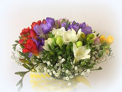 fragrant freesia (majka44) Tags: flower colors freesia fragrant nice bouquet 2019 macro poetry atmosphere mood romance romantic light day white
