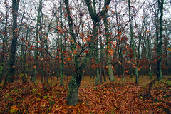 Red atmosphere (Dumby) Tags: landcape ilfov românia autumn fall red leafs outdoor colors nature