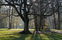 Schlosspark Ambras - Innsbruck (Ernst_P.) Tags: aut innsbruck österreich schlossparkambras tirol gegenlicht nebel herbst backlight sigma art 50mm f14 autumn fog otoño austria autriche tyrol arbol baum tree