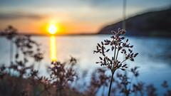 Un coucher près de l'eau. (arnaud_riviere) Tags: sunset water flower fleur soleil inspiration zen eau nature
