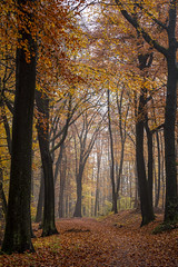 Autumn Colours (*Photofreaks*) Tags: essen ruhr kruppwald forest woods germany deutschland nrw nordrheinwestfalen northrhinewestphalia autumn fall herbst trees bäume path way foliage laub misty mist foggy fog nebelig nebel colours farben scenic tranquil placid ruhig friedlich beschaulich still malerisch landschaft landscape nature natur season jahreszeit adengs wwwphotofreakseu leaves leaf ruhrgebiet