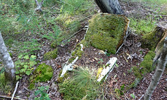 Old Car Seat Covered With Moss (Coastal Elite) Tags: beaverbank novascotia canada abandoned car seat chair automobile parts discarded trash moss nature wild wilderness green mousse grass hrm halifax nouvelleécosse