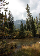 Trees in Canmore (JB by the Sea) Tags: canmore alberta canada september2019 rockies rockymountains canadianrockies policemanscreek policemancreek tree trees