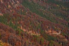 (*Vasek*) Tags: austria österreich europe autumn forest nature outdoors