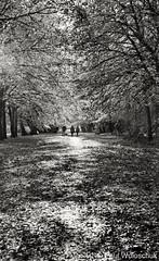 Photo of Autumn morning walk