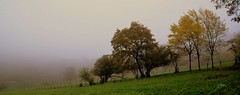 Un brouillard tenace, c'est ça aussi l'automne .... (Nathery Reflets) Tags: couleursdautomne brouillard brume automne nature paysage grandest alsace basrhin rosenwiller rosheim