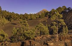 Montaña de Sámara, al fondo el Teide - Tenerife (Alphonso Mancuso) Tags: alphonsomancuso canon6dmarkii canon24105f4l teide montañadesámara tenerife islascanarias españa europa travel viajes outside montaña paisajevolcánico coronaforestal