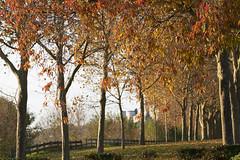 Allée automnale (Didier Pled) Tags: chinon allée automne