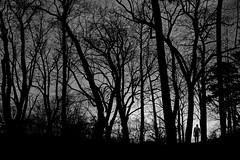 forest hiking (heinzkren) Tags: forest hiking nature wald human schwarzweis blackandwhite biancoetnero noiretblanc monochrome trees silhouette people man mann perchtoldsdorf herbst autumn canon eosr mystery magic