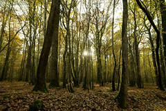 Soleil dans les arbres (Glc PHOTOs) Tags: 20191121150935glc4794nikond85024mmdxo glcphotos nikon d850 fx full frame 45mpixel tamron sp 2470mm f28 di vc usd g2 tamronsp2470mmf28divcusdg2 a032