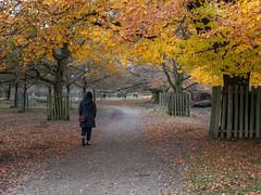 Dunham Massey (TheDavePhotoAlbum) Tags: dunham massey nationaltrust cheshire autumn trees