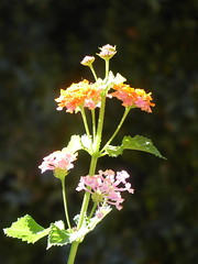 Bright flowers, Archeological Museum, Rhodes (luckypenguin) Tags: greece aegean dodecanese rhodes rodos unesco worldheritagesite archeologicalmuseum museum