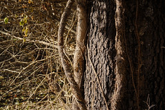 "Natural Contrasts - Autumn Afternoon (Modkuse) Tags: autumn autumnleaves fall contrast ""highcontrast"" nature natural natureart photoart art artphotography artistic artisticphotography woods velvia fujifilmxh1 fujifilmxh1velviasimulation fujifilm fujinon fujinonxf1655mmf28rlmwr xf1655mmf28rlmwr fineartphotography fineart tree trees treetrunk"