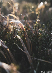 """Cold """"Warm"""" Morning_ (Alex Kozyr) Tags: grass frost morning wicklow ice sunreflection"""