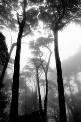 Portugal - Sintra - Parque e Palácio da Pena (RéGis.) Tags: portugal sintra parque palácio pena arbre trees foret bois forest wood