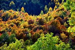 Boscos de Tardor, Vilallonga de Ter, Girona (Angela Llop) Tags: catalonia spain europe girona