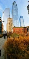 High Line (tareqsmith) Tags: highline manhnattan newyorkcity newyork usa etatsunis trees arbre automne fall city ville building sky ciel blue bleu