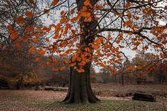 Dunham Massey (TheDavePhotoAlbum) Tags: dunham massey nationaltrust cheshire autumn