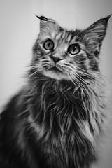 Tessa (unbunt.me) Tags: blackandwhite fujifilm fujixpro2 katze blackwhite bw cat fuji acros