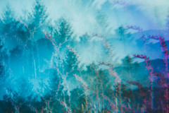 Blue oceans (Von Odence) Tags: kaleidoscope fantasy blur flowers flower floral nature greenery growth travel adventure