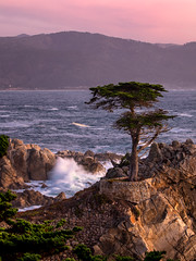 Lone Cypress (Eric Zumstein) Tags: monterey 17mile pebblebeach california unitedstatesofamerica cypress aoi bestcapturesaoi elitegalleryaoi