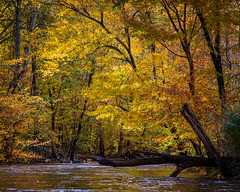 Fall Colors (Joe_R) Tags: water autumn trees fall columbia river maryland unitedstatesofamerica