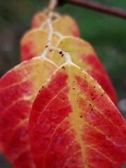 - (olivier.lours) Tags: macro plante nature