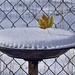 Snow & Maple Pie