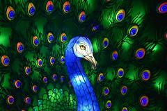 Péacóg (Keith Mac Uidhir 김채윤 (Thanks for 9m views)) Tags: dublin dublino dublín zoo wild lights ireland irish green blue orange black lantern light china chinese culture festival irland irlanda irlande irsko irlanti irlandia írország irska írẹ́lándì iirimaa