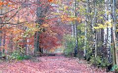 Fall (Anna's 50) Tags: fall canong1x