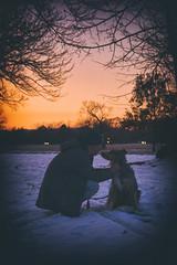 As the Sun Sets (flashfix) Tags: november202019 2019inphotos flashfix flashfixphotography ottawa ontario canada nikond7100 55mm300mm sock dog canine animal pet austrailanshepherd triaustrailanshepherd bluemerle tricolour heterochromia familytime portrait outdoors male