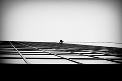 Scale (Dan Haug) Tags: windowcleaner ottawa slaterstreet scaling november overcast ropes brave courageous xpro2 xf35mmf14r fujifilm fujixseries monochrome mirroless