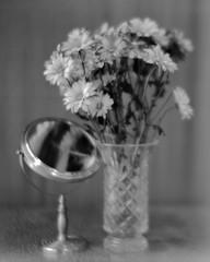 Daisies, Vase, Mirror (http://www.aimonephoto.com) Tags: 8x10 blackwhite ilfordfp4 intrepid8x10mkii largeformat rodinal wollensakveritar14f6lens film monochrome safe
