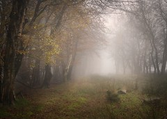 Wooded Mystery (Expose Photography uk) Tags: autumncolours tranquil scenic outdoors trees autumnleaves ethereal mystery uk shropshire nature winter autumn mist fog forest woodland landscape woods