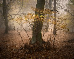 Lady Madonna (Expose Photography uk) Tags: landscape scenic winter autumn saplings outdoors autumncolours autumntrees autumnleaves nature leaves firest woods trees woodland