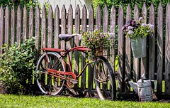 A Summer Fence (Wes Iversen) Tags: amishcountry fencefriday hff nikkor18300mm ohio zoar zoarvillage bicycles fence fences flowerbaskets flowers grass painterly picketfence plants summer texture wateringcans