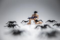 325/365 - Arachnophobia (Forty-9) Tags: canon eos6d eflens ef2470mmf28liiusm lightroom tomoskay forty9 studio strobist strobism yongnuo yongnuospeedliteyn560iv photr softbox project365 365 2019 3652019 project3652019 day325 325365 november 21stnovember2019 21112019 photoaday thursday stikfas spiders spider arachnid arachnophobia