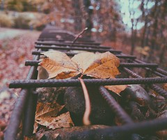 Nothing Gold Can Stay (erlingraahede) Tags: poetic autumn bedifferent canon melancholic vsco holstebro denmark november raahedep