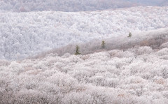 Heavy Frost (Dalliance with Light (Andy Farmer)) Tags: autumn minimalism landscape nature mountains frost forest shenandoahnationalpark skylinedrive fall pinetrees appalachaintrail bentonville virginia unitedstatesofamerica