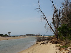 Coffs Creek (mikecogh) Tags: coffsharbour nsw coffscreek sand outlet dead tree nature
