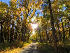 IMG_E3492 (wjaachau) Tags: colorado cherrycreekstatepark forestpathway forest sunset trees nature naturebeauty landscape park autumn autumncolors autumnleaves hikingtrail
