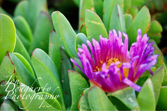 Gotta Love Nature Photos (Jon Dougherty Photography) Tags: nature plant morningdew morning flower