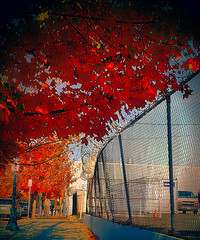 Contrast...The World We Live In (creepingvinesimages) Tags: hff fence trees concertinawire colors fallfoliage ninterstateave portland oregon samsung galaxy s9 pse14 sme topaz
