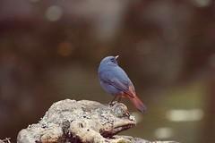 回眸 (mikleyu) Tags: 鳥 動物 自然