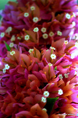 Cluster of flowers in pink and orange tone IMG_0931-007 (iezalel7williams) Tags: flora nature flowers orange pink lovely photo paradise pretty beautiful photography canoneos700d nice happylife high light love floral natural colorful beauty white energy vibration joy clusterflowers exotic thinkpositive thankyou green