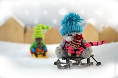 SLEIGH RIDE ||  SLEETJE RIJDEN (Anne-Miek Bibbe) Tags: magicsnow nepsneeuw magic mágico lookingcloseonfriday sneeuw slee snow sledding canoneos70d annemiekbibbe bibbe nederland 2019 tabletopphotography speelgoed toy spielzeug giocattoli juguetes bringuedos jouets bear teddybear beertje teddybeer beer speelgoedbeer nounours minibeer minibear